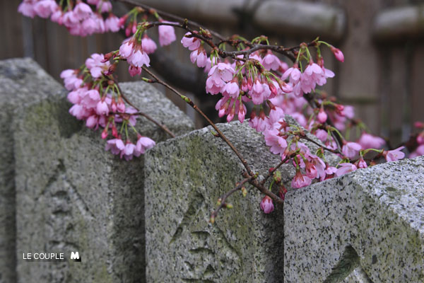 KURUMAZAKI-001