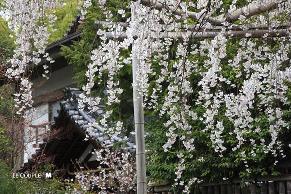 KURUMAZAKI-015