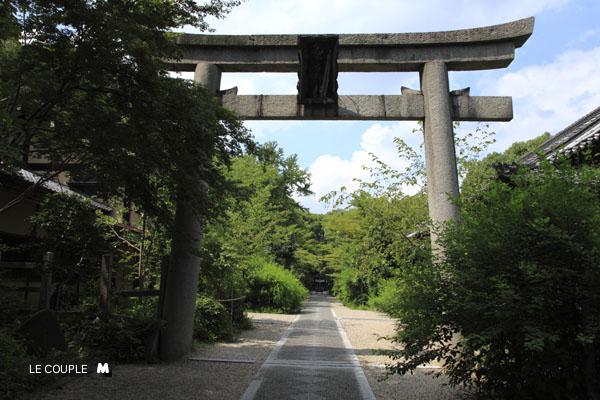 NASHINOKI-003