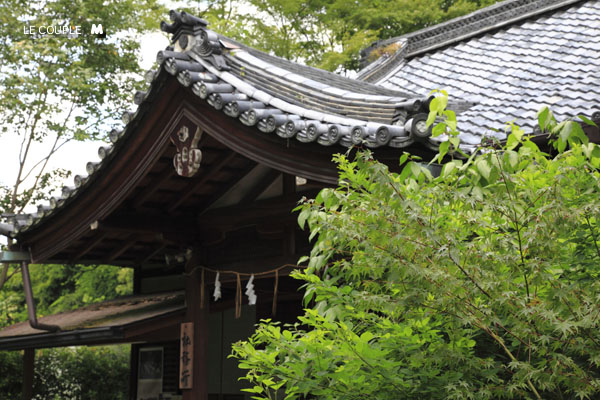 NASHINOKI-013