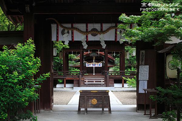 NASHINOKI-050