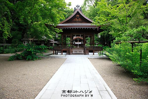 NASHINOKI-075