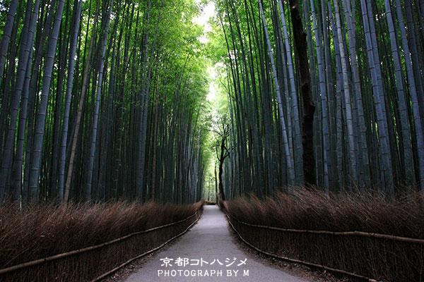 TAKEBAYASHI-010