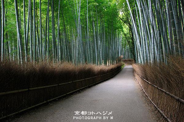 TAKEBAYASHI-040