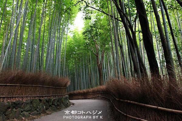 TAKEBAYASHI-060