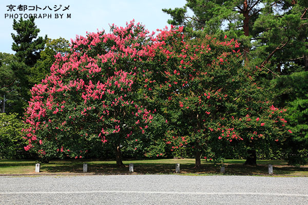 KYOTOGYOEN-010