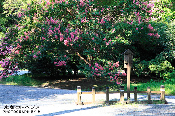 KYOTOGYOEN-035