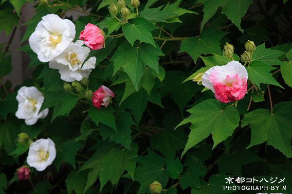 SHINNYODOU-075
