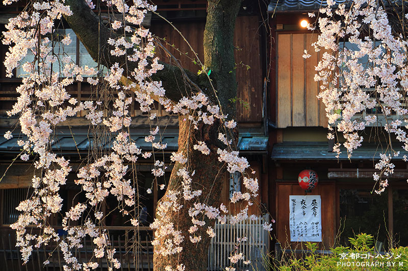 GIONSHIRAKAWA-055