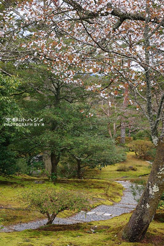 SHUGAKUINRIKYU-015