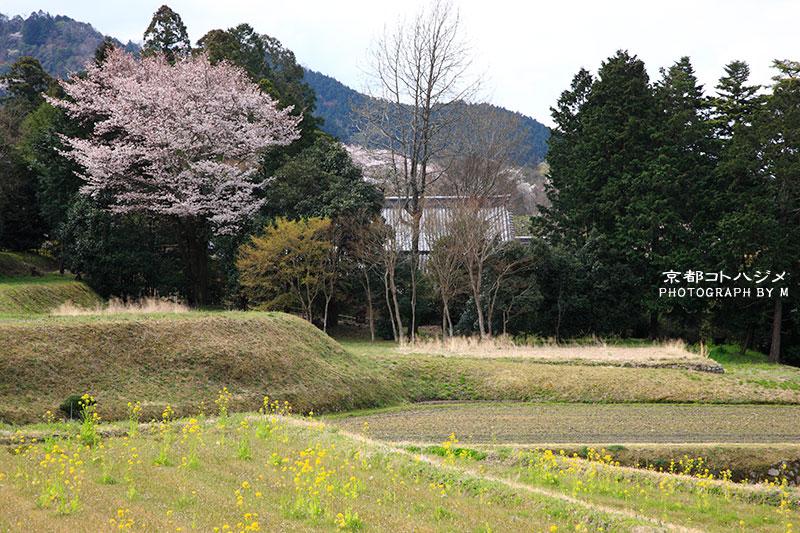 SHUGAKUINRIKYU-070